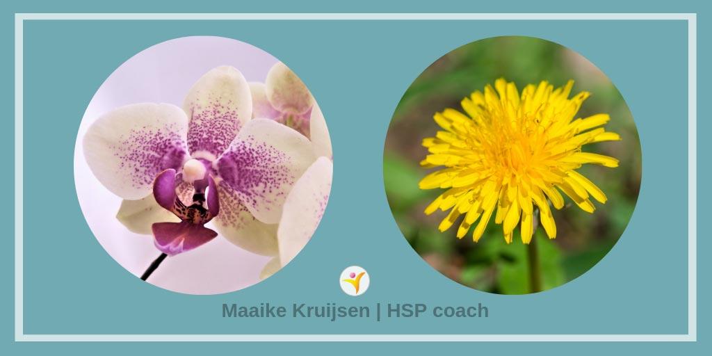 Wetenschappelijke HSP weetjes - orchidee