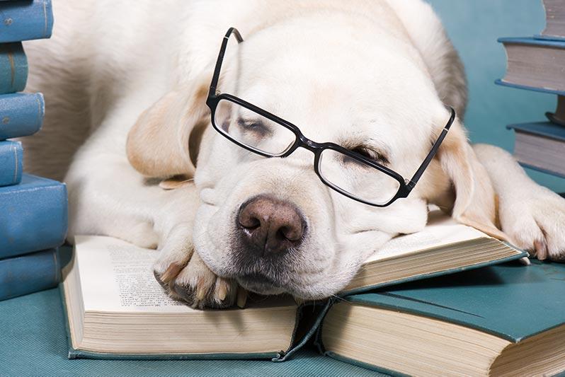 Boeken HSP - labrador