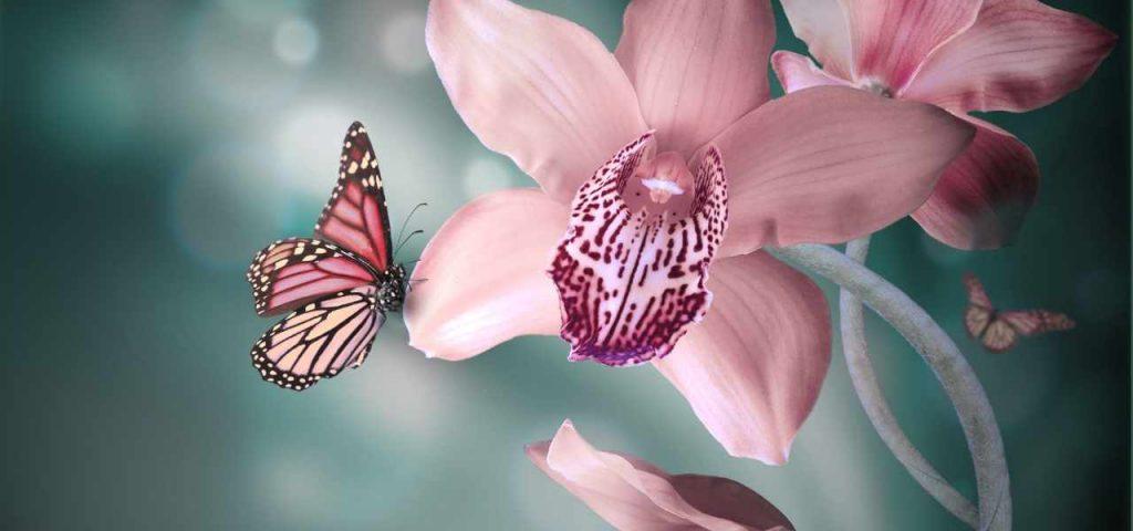 Orchidee en vlinder