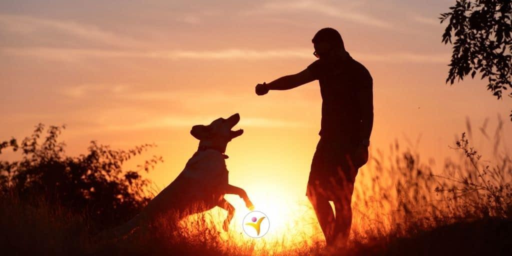 Hoogsensitiviteit en dieren - rouwen om een huisdier
